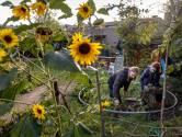 Tijd van strijd is voorbij: krakers Boschgaard gaan zelf sociale huurwoningen voor Zayaz bouwen