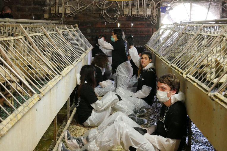 Dierenrechtenactivisten van Animal Resistance ketenden zich vast tussen de eendenkooien.