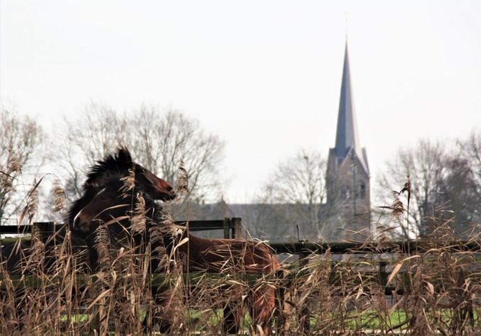 Ciel Saris maakte deze foto in Nederwetten.