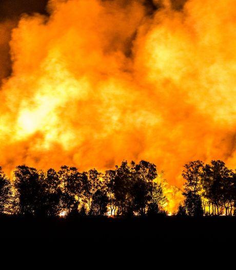 WNF: 'Wereldwijd meer bosbranden dan vorig jaar'