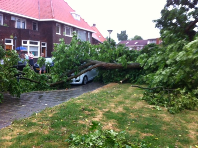 Aan de Frederika van Pruisenweg in Eindhoven viel een grote tak van een oude boom op een auto.