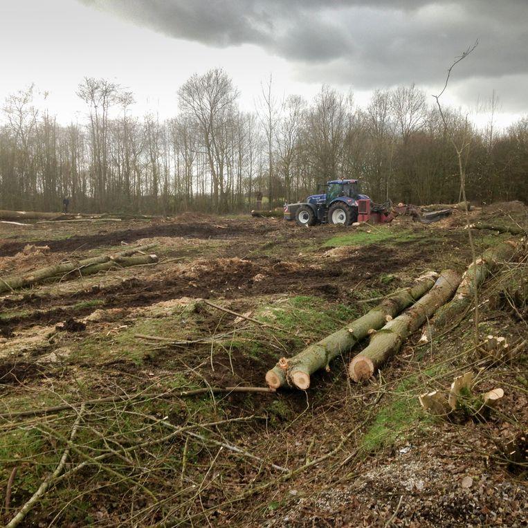 Het bos grenzend aan de terreinen van KFC Volharding Wintam-Eikevliet is volledig gekapt.