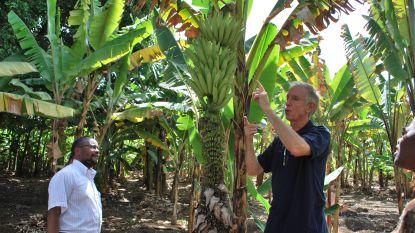 Leuvense prof heeft 's werelds grootste collectie bananen: en raad eens wat hij hier nooit eet...