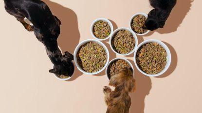 Deliveroo voor hondjes: hondentraiteur levert binnenkort ook bij u aan huis