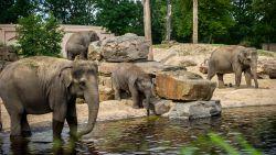 Antwerpse Zoo en Planckendael verliezen 100.000 euro omzet per dag