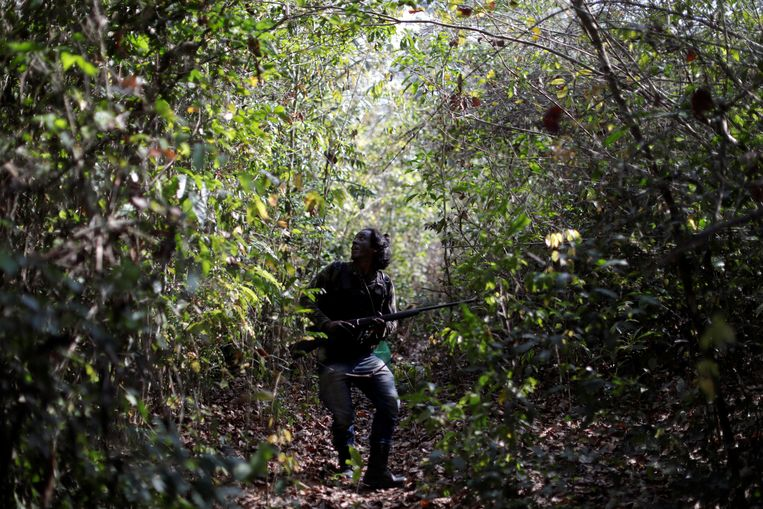 Een lid van het Indianenvolk Guajajara is op zoek naar illegale houthakkers. Beeld REUTERS