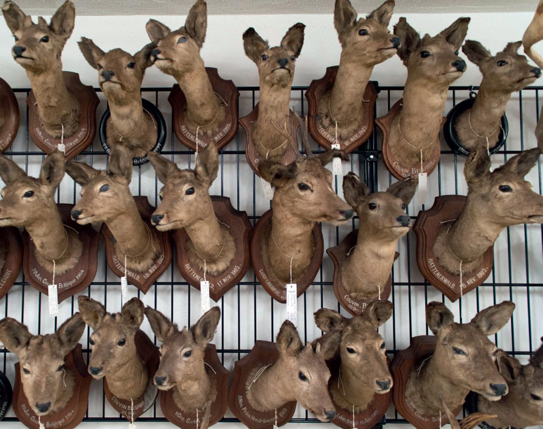 Collectie Naturalis: de meeste dieren in de collectie die Naturalis beheert zijn geen natuurlijke dood gestorven, maar omgebracht om  in de collectie te kunnen bijzetten