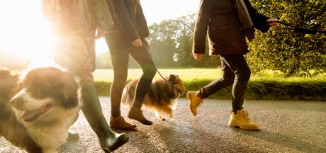 Winterswijk start grote wandelcampagne, mét de 'concurrenten'