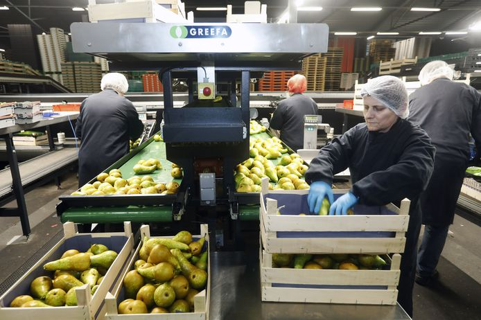 FruitMasters in Geldermalsen
