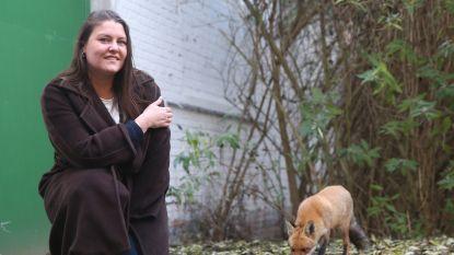 Gentse vrouw krijgt elke dag vos op bezoek