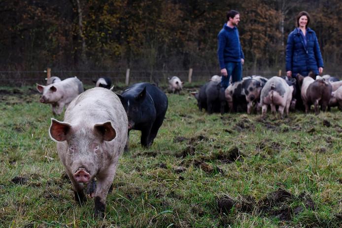 De varkens van Den Elshorst lopen op terrein van het Brabants Landschap. Op de achtergrond Ben Bruurs en Thea Moonen.