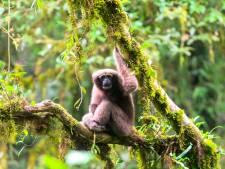 Boybandvleermuis en pannenkoekmeerval: dit zijn de opmerkelijkste nieuw ontdekte dieren