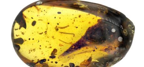 Un minuscule dinosaure découvert figé dans l'ambre depuis 99 millions d'années