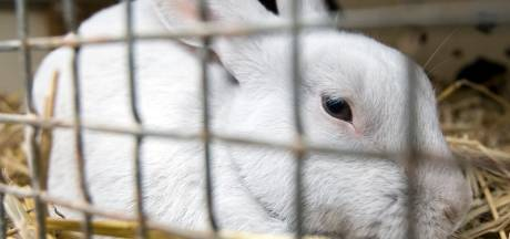 De lockdown valt je zwaar? Jouw konijn voelt zich altijd zo!