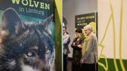 Pop-upexpo 'Wolven in Limburg' bereikt kaap van 10.000 bezoekers