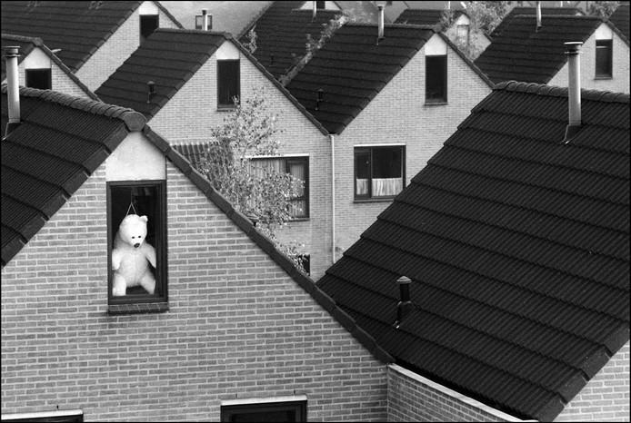 De beer uit Lindenholt van fotograaf Flip Franssen.
