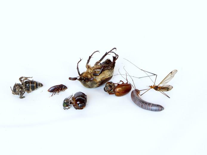 Steeds minder insecten