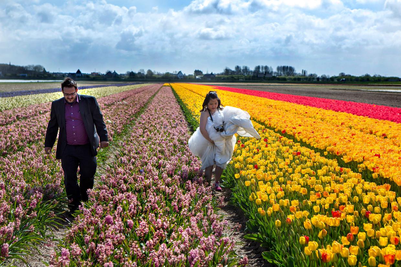 Een verliefd Deens-Chinees bruidspaar maakt foto's in de bollenvelden bij Noordwijkerhout. Beeld Najib Nafid