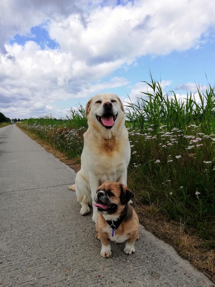 Otis en kleine Tommie poseren op een van mooiste plekjes van Brabant, de Flaasbloem in Chaam.