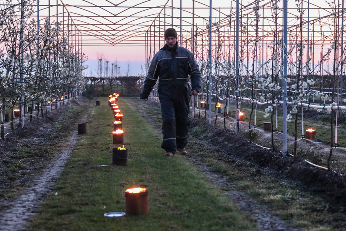 Luttelgeest - Het bedrijf van Bert Verhage telt onder andere appels, peren, pruimen en kersen, in totaal 23 hectare aan fruit. Het is altijd een behoorlijke klus om alle gewassen te beschermen tegen de vorst. Zo doet Verhage dat met vuurpotten in de boomgaard en het beregenen van de gewassen.