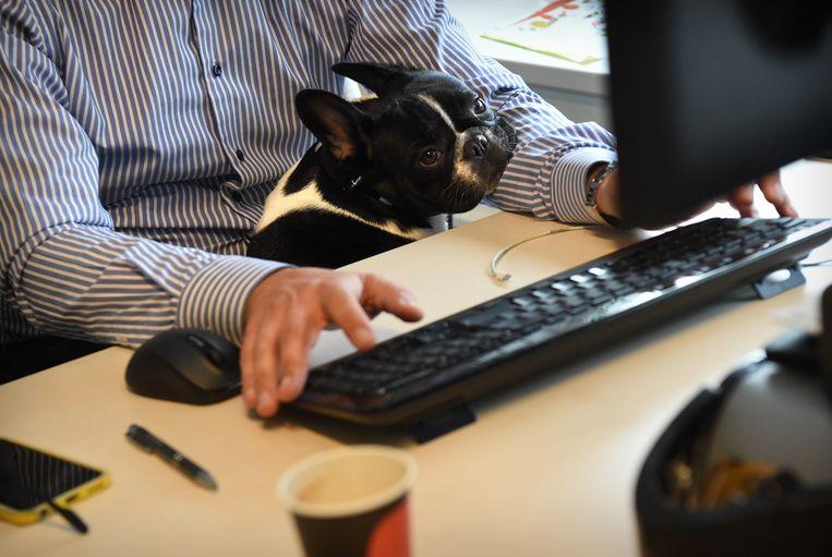 Leef je langer met een hond aan je zijde, of zijn hondenbezitters sowieso fitter? Beeld Marcel van den Bergh