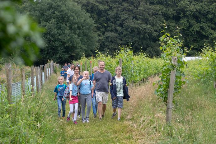 Avondvierdaagse door de wijngaard bij Wageningen in 2018.