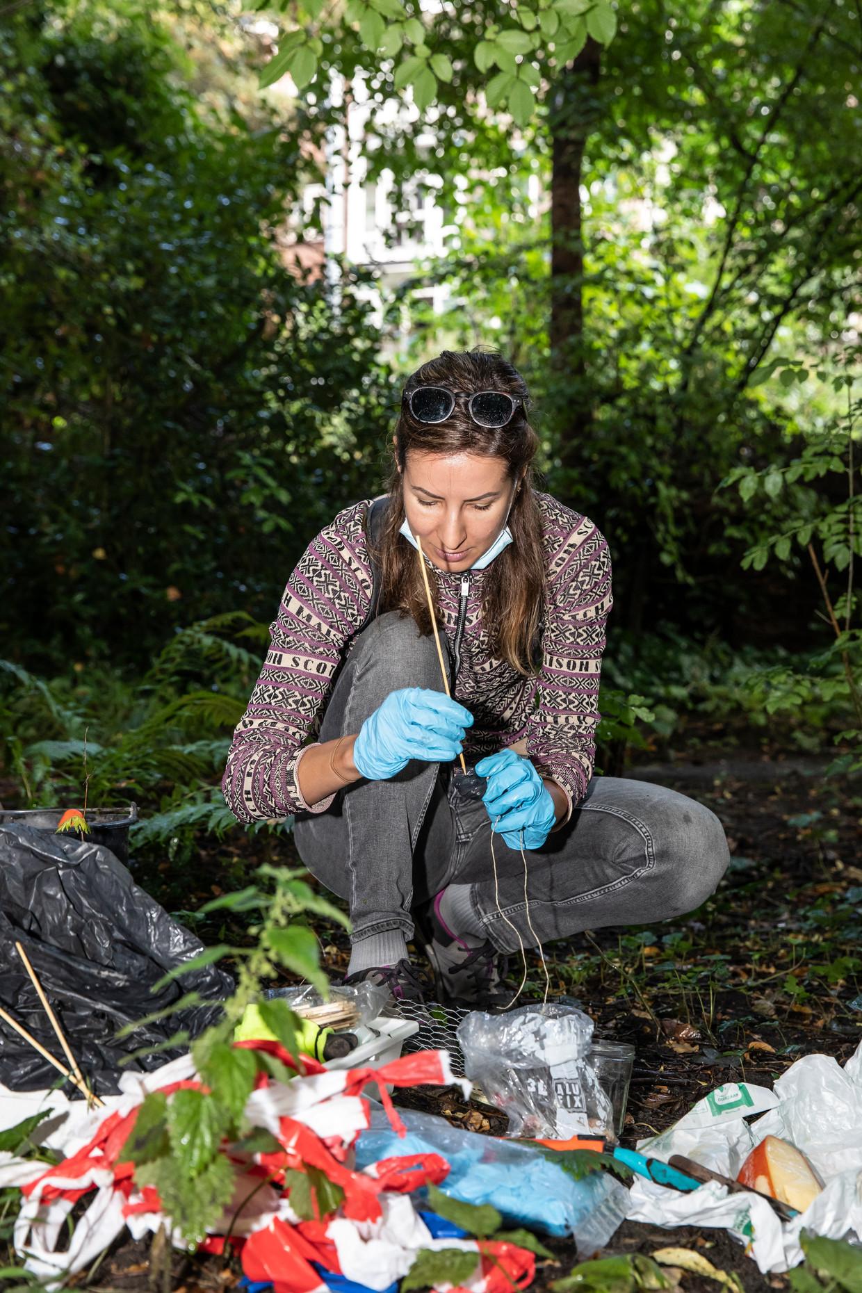 Onderzoeker Iva Njunjić demonstreert hoe je een insectenvalletje met aas maakt.