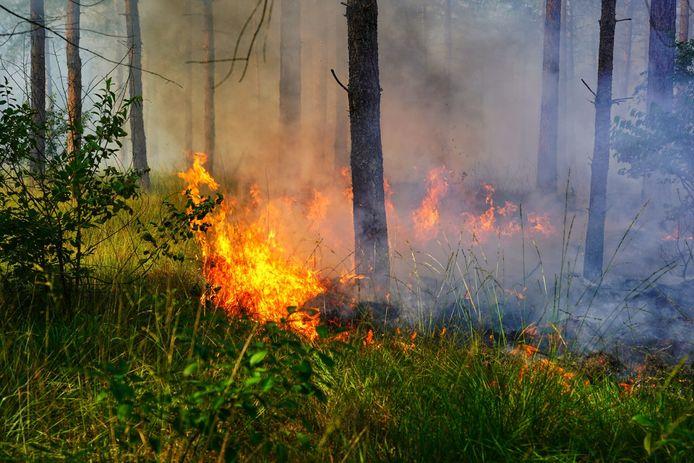 In de Chaamse bossen is opnieuw brand uitgebroken.