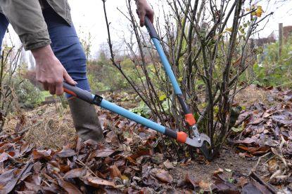 Begin je al met werken in je tuin, of is het best om te wachten? Onze experte klaart uit