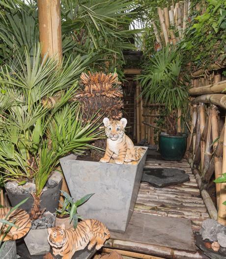 'Junglehuis' speelde hoofdrol in reportage over hennepteelt