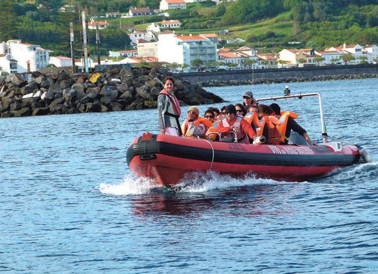 Tweemaal per dag kan je met de boot gaan walvissen spotten vanuit uit Horta.