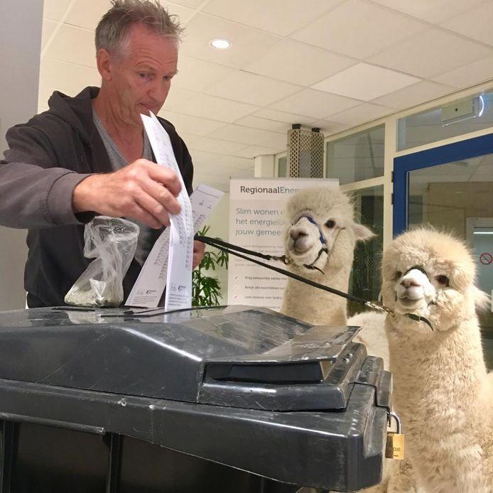 Bas Kooij brengt samen met zijn alpaca's Ohio en Kwint zijn stem uit voor de Europese verkiezingen op het gemeentehuis van Hendrik-Ido-Ambacht.