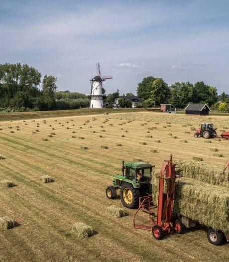 Jan en zoon Jan oogsten hooi op traditionele manier: 'Veel mensen vinden dat makkelijk'