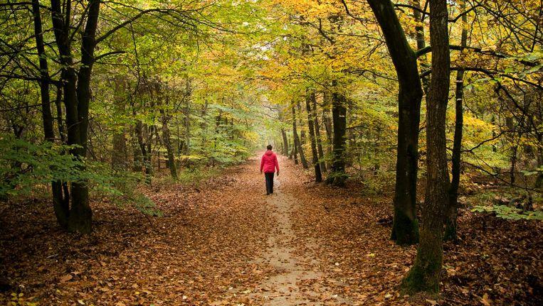 Herfstbos op de Veluwe, een van de genomineerde natuurgebieden. Beeld anp