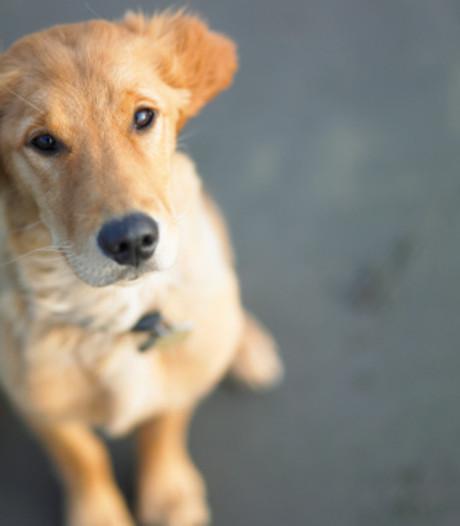 MSD: Geen bewijs dat hondenvlooienmiddel niet deugt