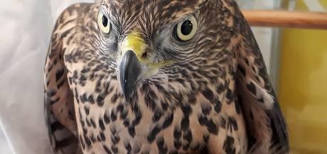 Vogelrevalidatiecentrum Zundert: Stilte