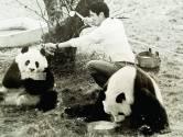 Dierenarts Beekse Bergen blikt terug op eigen 'pandadroom' in 1987: 'Die dieren zijn stronteigenwijs'