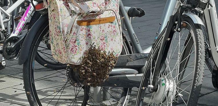 Bijen nestelen in fietstassen