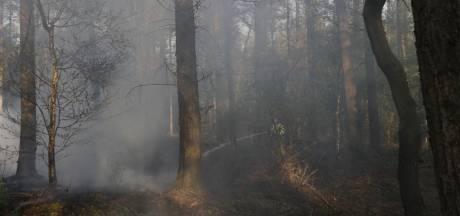 Wéér bosbrand in Land van Cuijk: grote brand bij Sambeek