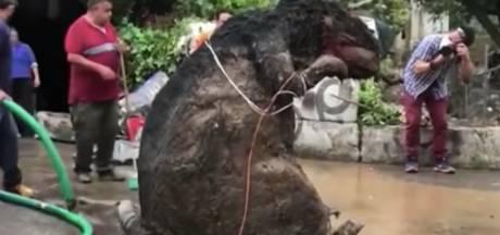 'Reusachtige rat' veroorzaakt enorme verstopping en overstroming riool Mexico-City