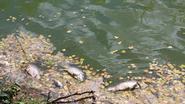 Vissen sterven massaal door hitte