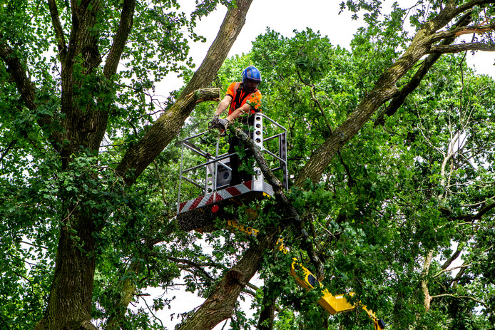 Loszittende takken worden verwijderd van bomen in de Joke Smitstraat in Deventer.