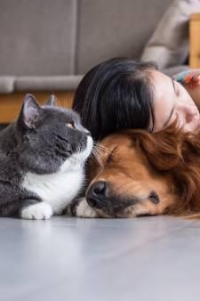 Tamme huisdieren: 'We hebben katten letterlijk gekooid om ze in huis te krijgen'