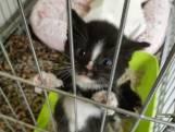 Dode kitten gevonden in Tholen, drie andere kittens opgevangen