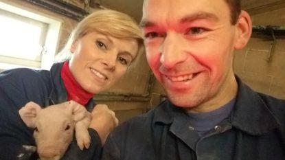 Animal Rights klaagt varkensboer aan na VTM-uitzending