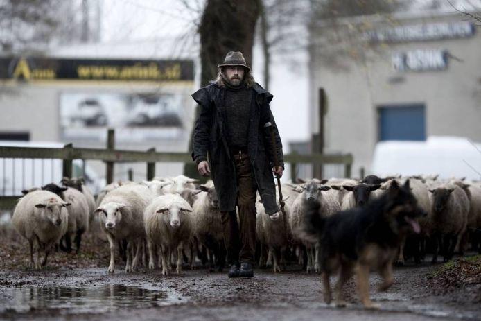 De Winterswijkse schaapsherder Roelf Kuipers met zijn kudde.