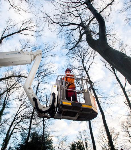 Kap op bomen in Arnhem opgeschort in afwachting van nieuw beleid
