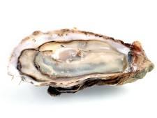 Une huître de 2,2 kilos découverte en Bretagne, un record?