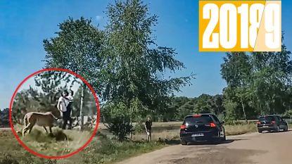 Hoe de hele wereld keek naar het 'domme' gezin tussen de jachtluipaarden