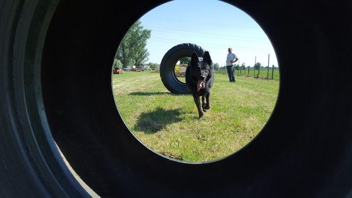 In het Hondenspeelparadijs  in Bunnik kunnen honden hun energie kwijt.